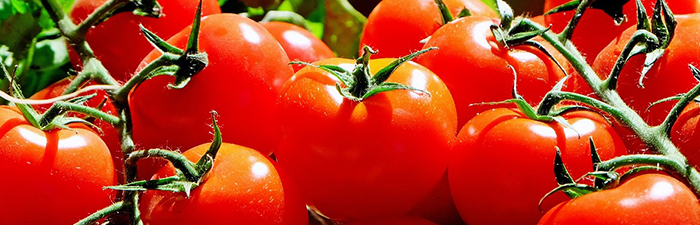 Tomatoes_Banner