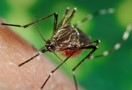 July 22, 2016: First Mosquito Pool Positive for West Nile Virus in Columbus