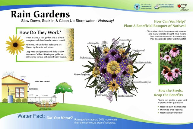 central ohio rain garden initiative  corgi