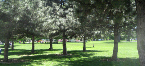 Livingston Park Image