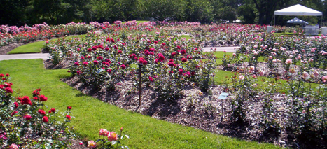 Park of Roses Image
