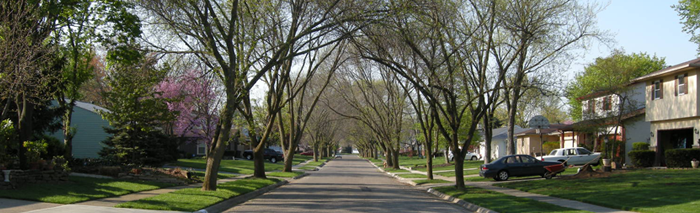 Urban Forestry Page Gallery Image 1