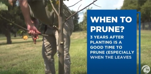 UPDATE How to prune a tree