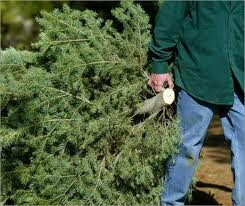 Holiday Tree Disposal